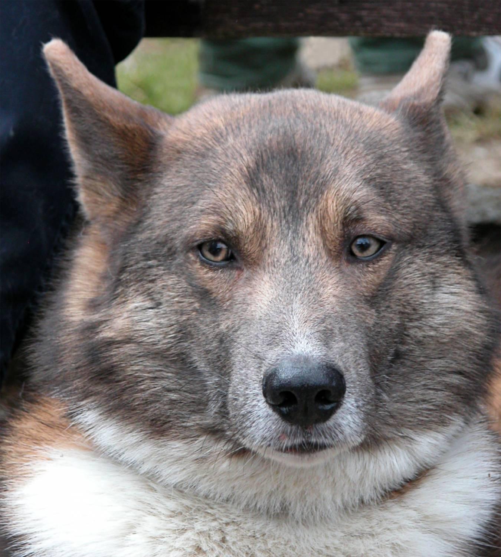 Байкал и Дея Из жизни вилюйских собак. Повесть